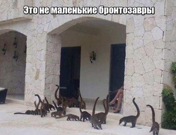 Подборка прикольных фото №1933 (49 фото)