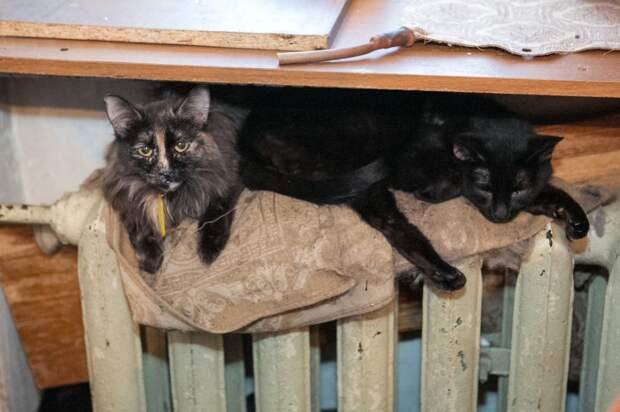 В Томске 18 кошек остались без присмотра после смерти хозяйки