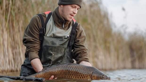 Товарное рыбоводство вРостовской области может исчезнуть вближайшие годы
