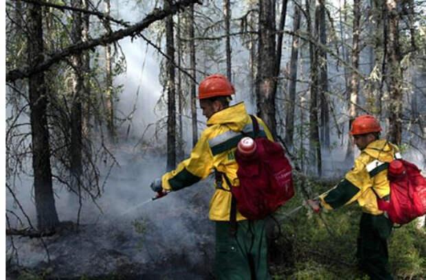 Площадь лесных пожаров в Якутии достигла площади Грузии