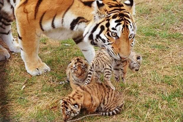 10 видов животных, которых человечеству удалось спасти в последний момент