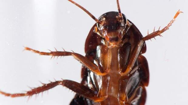 Огромные тараканы-мутанты захватили подъезд московской многоэтажки