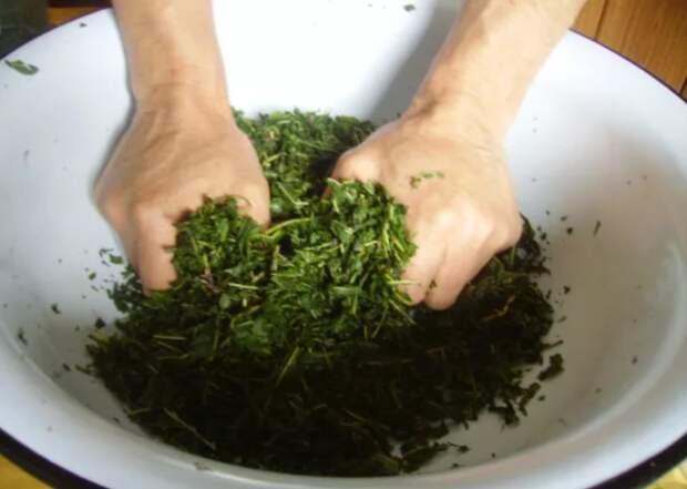 Листья смородины после заморозки выкладываются в глубокую миску, после чего их следует хорошенько подавить / Фото: horod.info
