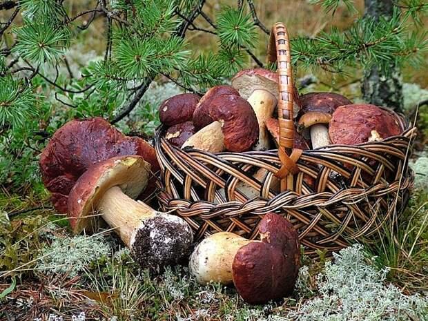 Отравление грибами: будьте осторожней!