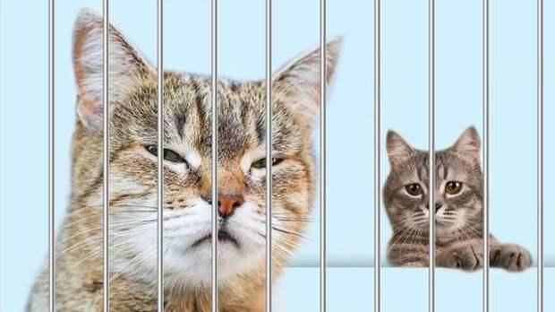 Дюжину кошек «арестовали» за долги россиянки. Полиция бессильна, а мэра обвиняют в предвзятости