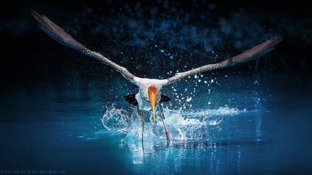 The Blue Splash ! by Sunil  on 500px.com
