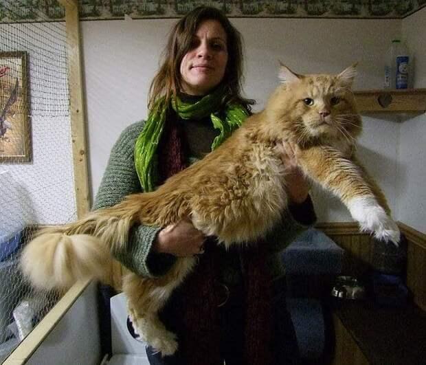 Серьезный парень животные, кошки, фото