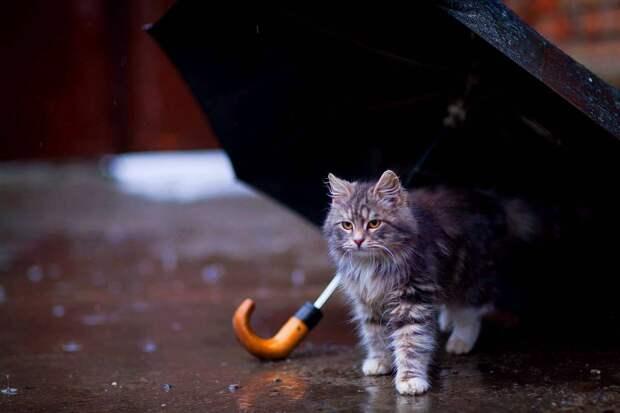 Кот под дождём