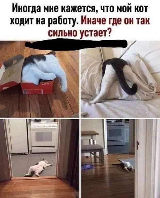 Возможно, это изображение (кот и текст «иногда мне кажется, что мой кот ходит на работу. иначе где он так сильно устает?»)