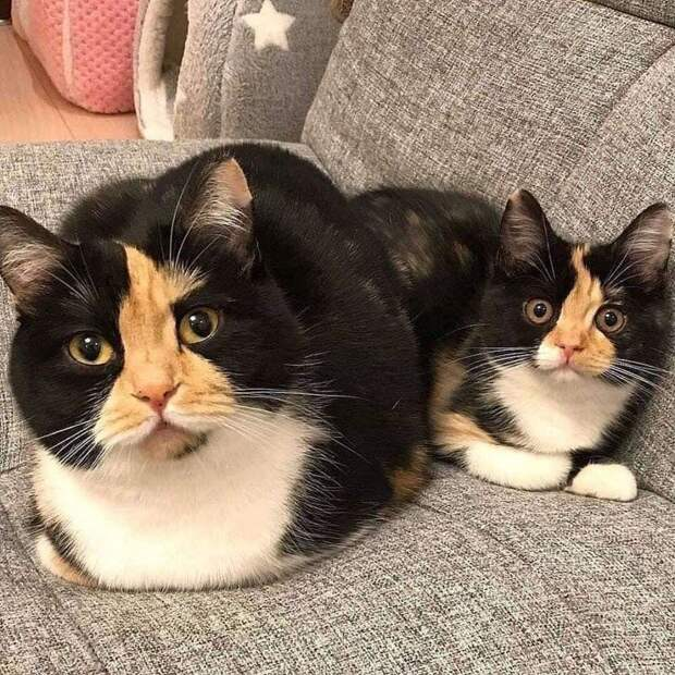 Кошечки, которые запросто взломают ваше сердечко