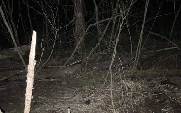 В лесу под Рязанью охотники нашли кости человека