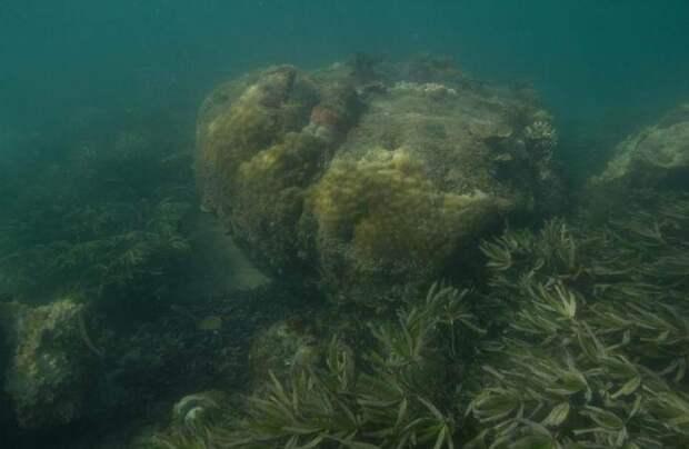 Возле Танзании обнаружили затерянную «африканскую Атлантиду»