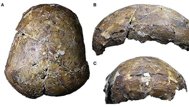 Древнейший человек Азии оказался более загадочным, чем считали ученые