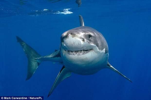 Из-за потепления 11 видов акул покидают тропики и атакуют курорты Европы