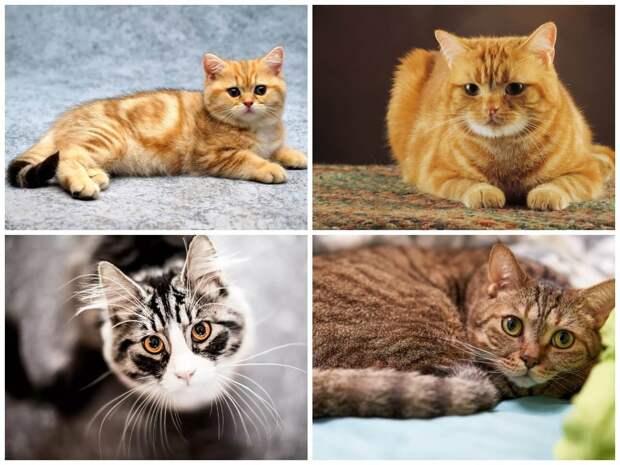 На фото изображены коты и кошки (часть 1).