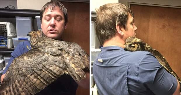 Благодарная сова обняла своего спасителя животные, объятие, сова, спасение