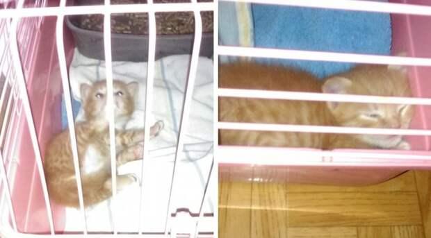 Девушка заменила маму трехнедельному котенку с дороги