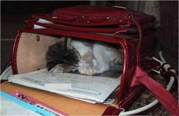 Что делать когда нет своей кровати?  видео, животные, коты, прикол