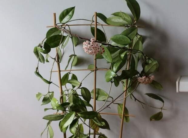 5 экзотических растений, которые без труда можно вырастить у себя в комнате