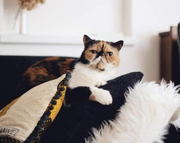 Ну вы сами всё видите… животные, кот, милота, мимика, морда, ненависть