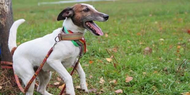 На Анненской починили собачий тренажер – «Жилищник»