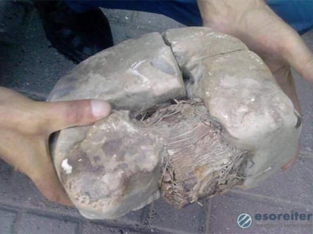 Учёные исследуют артефакт, которому 20 тысяч лет