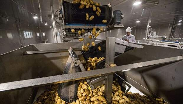Картофель на технологической линии на заводе по переработке и производству замороженного картофеля ГК Белая дача в Липецкой области