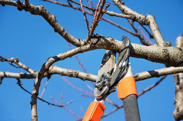 На Алтуфьевском шоссе провели санитарную обрезку деревьев
