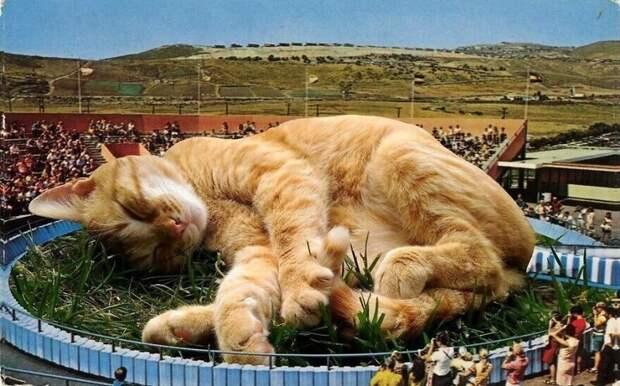 Мастер фотошопа показал, каким станет мир, если его захватят коты