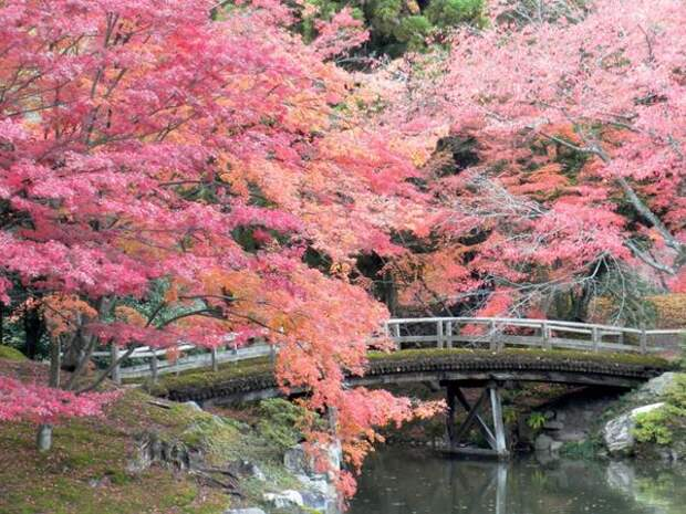 Императорская столица: достопримечательности японского города Киото