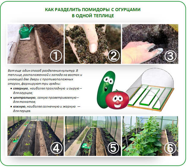 Вариант разделения растений огурцов и помидор в одной теплице. https://vasha-teplitsa.ru
