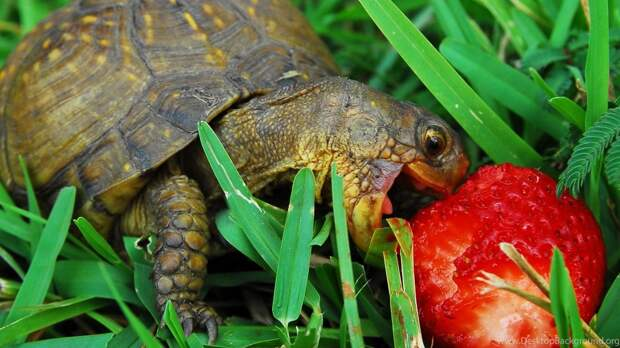 https://www.desktopbackground.org/download/2560x1440/2015/08/11/993512_hungry-turtle-wallpapers-hd-wallpaper-backgrounds-of-your-choice_2560x1600_h.jpg