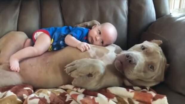 Собаки-няньки заботятся о детях. Невероятно милое видео растопит ваше сердце