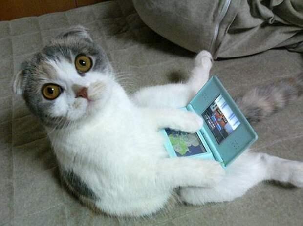 Смешные и позитивные котейки для настроения (12 фото)
