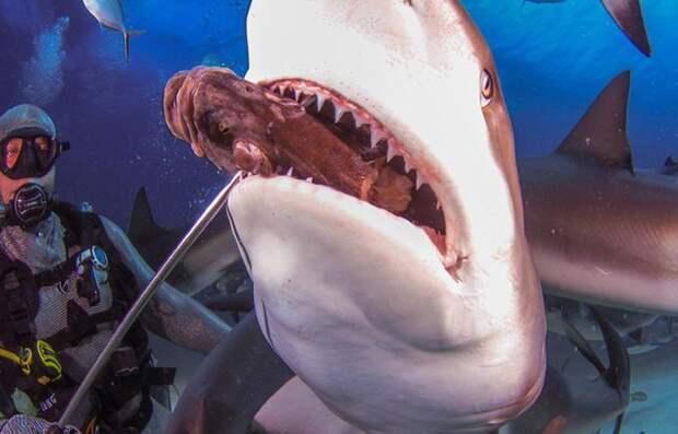 Покорми акулу, Багамские острова.