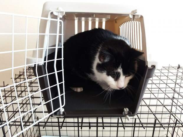 Слепой кот жил в железной клетке, потому что другие кошки его били и забирали еду...