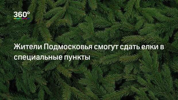 Жители Подмосковья смогут сдать елки в специальные пункты