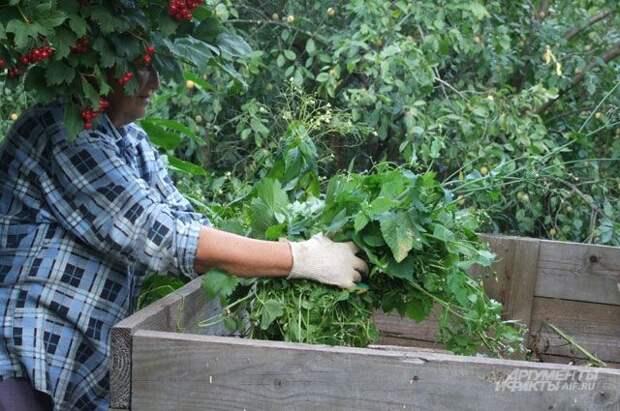 Суперудобрение для чудо-урожая. Делаем компост