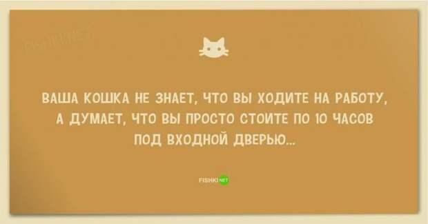 25 смешных анекдотов про кошек и котов