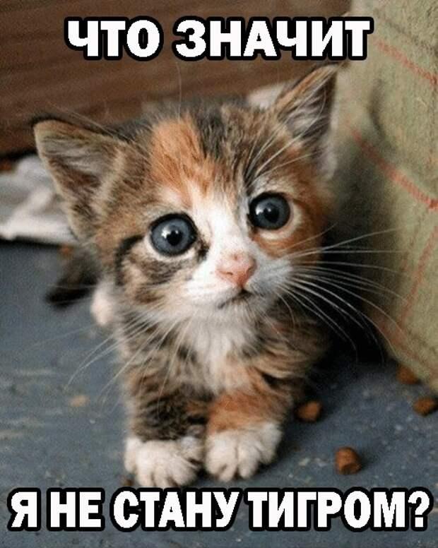 Смешные картинки с милыми животными