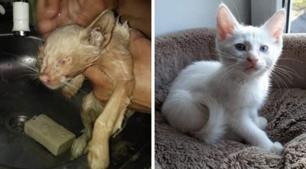 Грязный худой котенок приковылял к фотосалону, прося помощи белый котенок, истории спасения, история спасения, кот, котенок, кошка