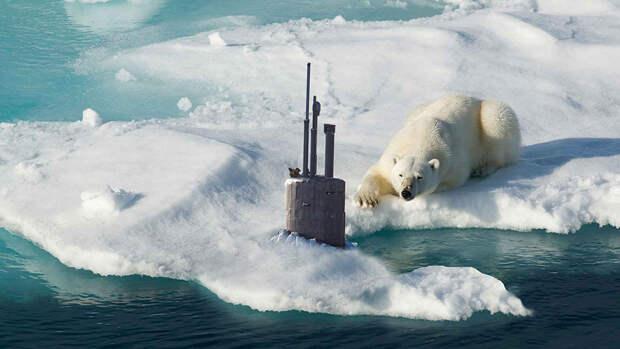 Шойгу рассказал, как медведь чуть не помешал подлодке всплыть в Арктике