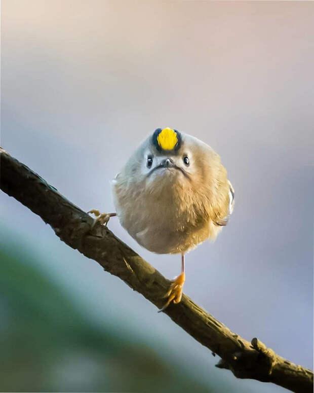 как выглядят птички Angry Birds в реальной жизни 9