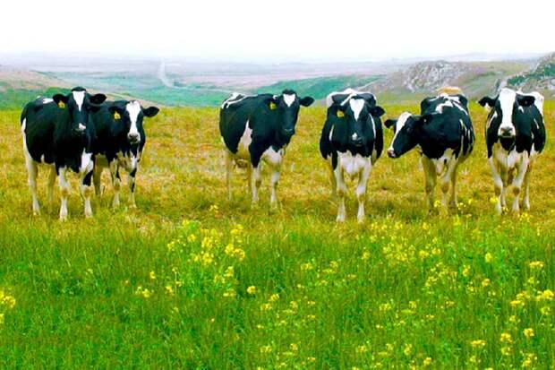Диетолог о возможном переходе человечества на мясо-синтетику