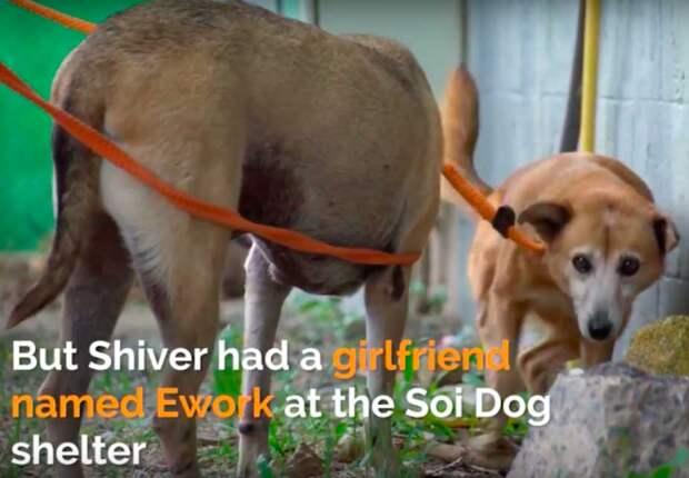 За шесть лет в приюте этот пес нашел себе лучшую подругу. И когда за ним пришли, он ее не бросил