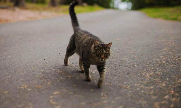 Обратной дороги нет - Семья потеряла кошку в другой стране, но спустя месяц она вернулась и ждала их у дома