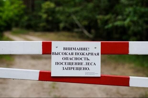 В Сочи из-за пожароопасности запретили отдых в лесах
