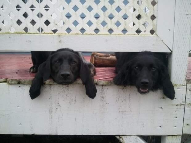 19 забавных и любознательных собак, без которых жизнь на даче была бы скучна