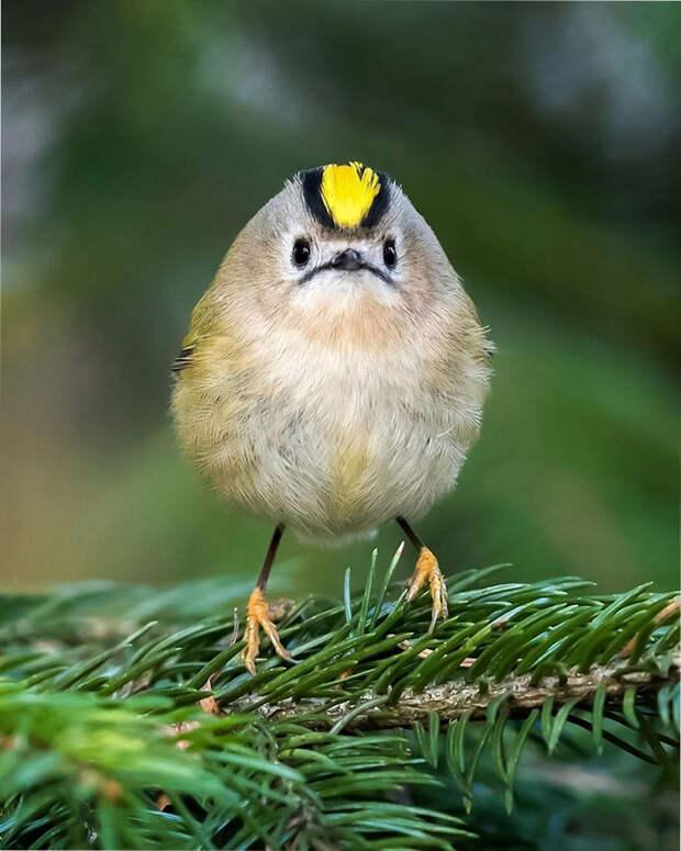 как выглядят птички Angry Birds в реальной жизни 3