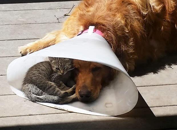 Прятаться от солнца - вместе животные, забавно, котопост, коты, кошки, неожиданно, питомцы, юмор
